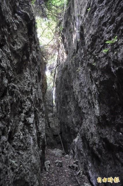 壽山步道有特殊石灰岩地形景觀。(記者葛祐豪攝)