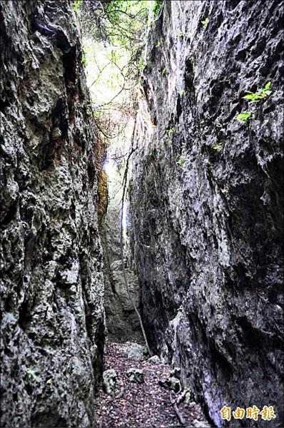 壽山步道擁有特殊石灰岩地形景觀。(記者葛祐豪攝)