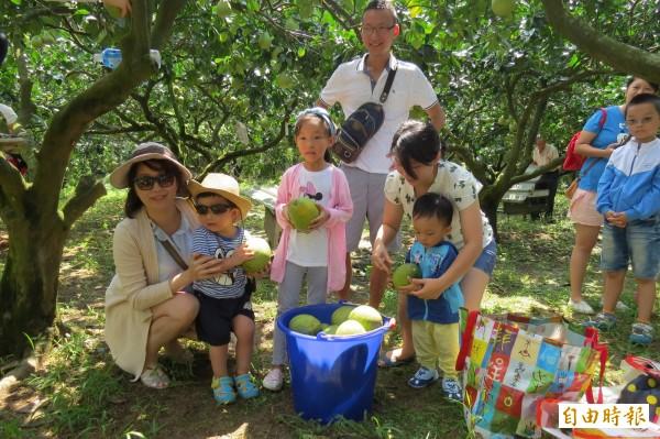 3日、4日適逢假日,許多參與認養柚樹活動的民眾,驅車前往果園採柚,個個開心不已。(記者俞肇福攝)