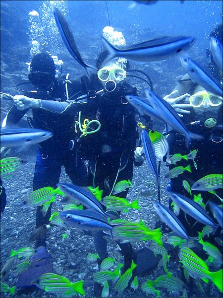 一群潛水客驚喜巧遇上千隻藍尾冬魚群,數大就是美,大批魚群悠游,讓潛水客又驚又喜。(藍海屋潛水提供)