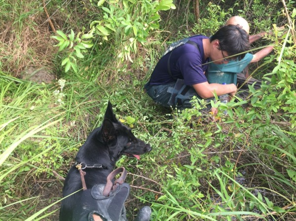 搜救犬「萊麗」尋獲失蹤24小時的蔡姓老翁。(記者蘇福男翻攝)