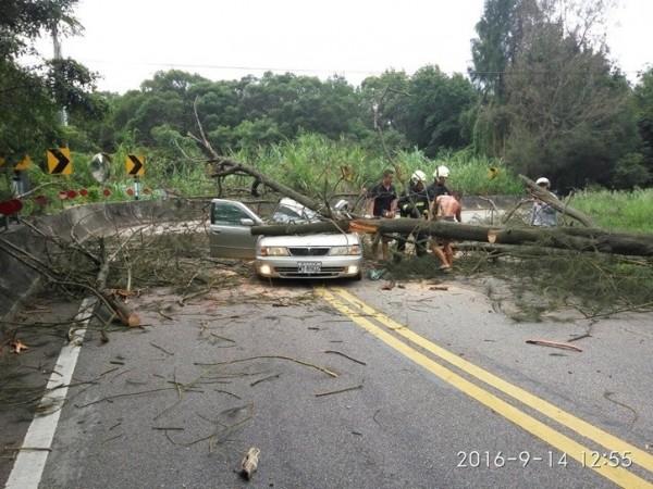 金門縣一名40歲楊姓男子,因路樹倒塌砸毀車輛受傷。(金門縣政府消防局提供)