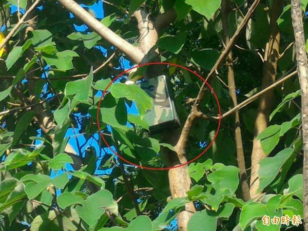 監視系統架設在樹叢中,提升查緝能力。(記者黃鐘山攝)