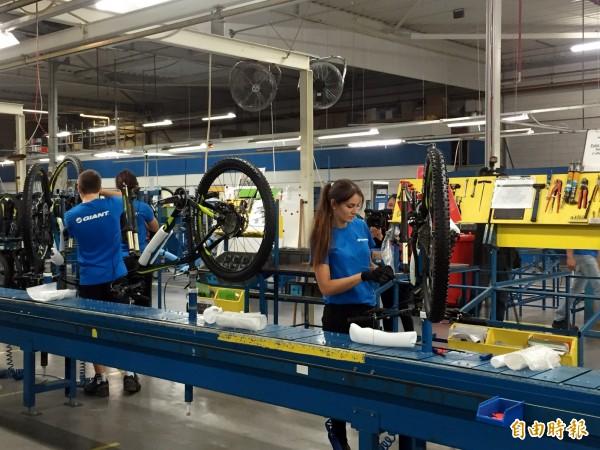 捷安特在荷蘭成立歐洲分公司,目前已成為歐洲自行車三大品牌之一。(記者張菁雅攝)