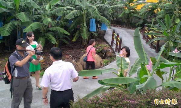 南投縣集集鎮「集元果觀光工廠」今開幕,園區「紫夢幻蕉」、「蛤仔蕉」等香蕉樹,吸引大家駐足觀賞、拍照。(記者謝介裕攝)