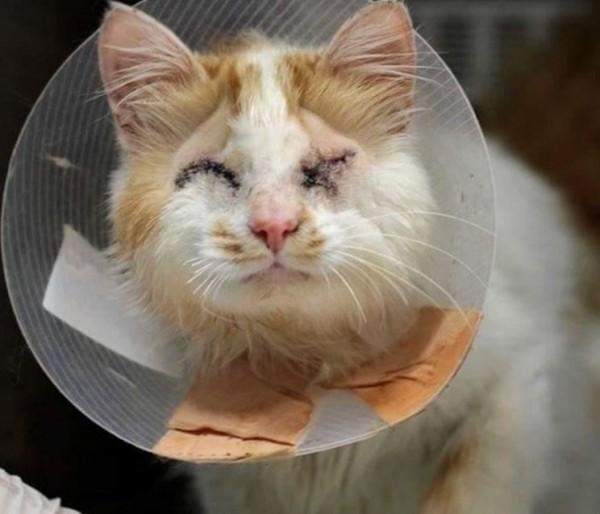 馬丁的前飼主疏於照顧,導致雙眼嚴重感染失明。(圖擷自LoveMeow網站)