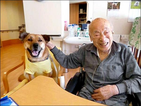 神奈川縣橫須賀市養老院「櫻之里山科」,開放老人攜帶寵物入住。(取自網路)
