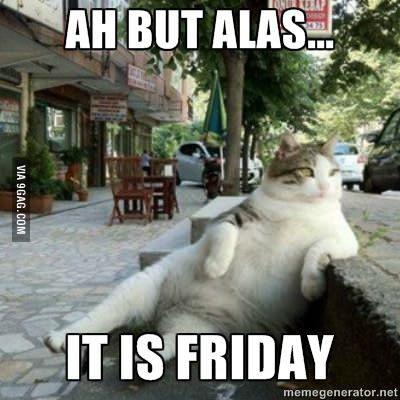 土耳其貓咪Tombili因為這張照片在網路上爆紅。(圖擷取自9GA9)