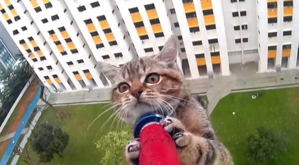 小貓咪跑到12層高樓的窗台外讓自己進退不得,動物救援隊以伸縮套環成功地救出小貓,驚險的過程讓網友驚呼連連。(圖擷自「SPCA Singapore」臉書)