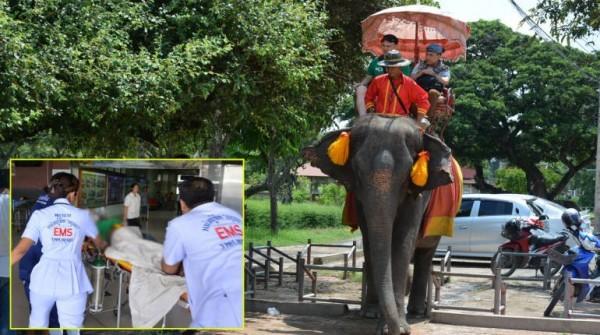 女子強逼大象吃香蕉,遭大象攻擊。(圖取自thairath)