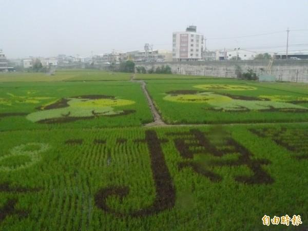 市府在大安溪橋北側規劃花博彩繪稻田。(記者張軒哲攝)