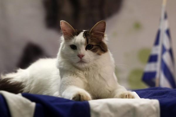 在歐洲也有賞貓景點,像是希臘的「貓島」、土耳其的「KALKAN港」等地,都有許多的貓咪生活在那裡,更是貓奴必朝聖之地。(歐新社)