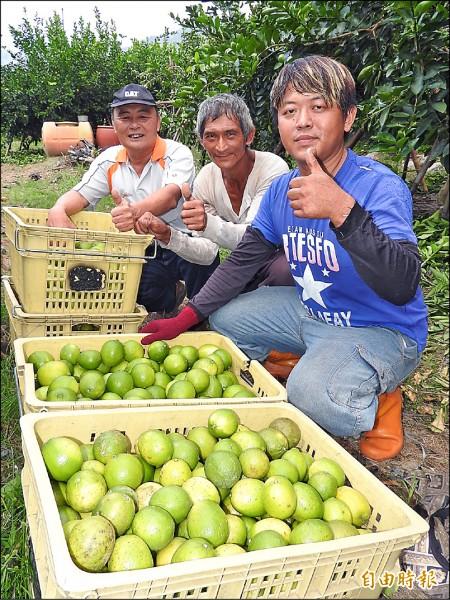 看到辛苦栽種無毒檸檬收成,李洽滄(右)感謝父親李鏡澄(中)及休區理事長羅智彬(左)的支持。(記者佟振國攝)