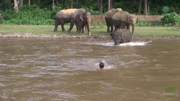 小象看到有人在河中載浮載沈,立刻轉身衝進河中。(圖擷自YouTube)