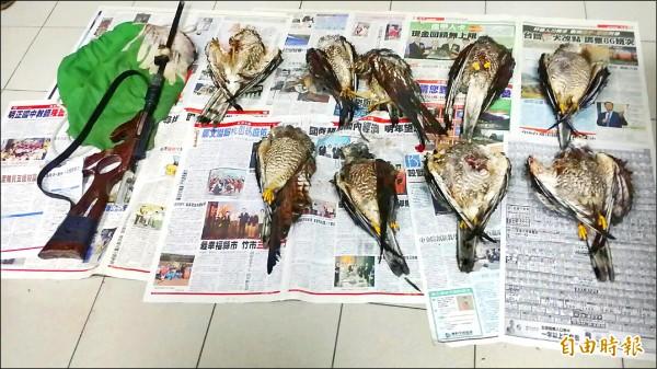 ▲灰面鵟鷹每年雙十節前後飛至恆春、滿州,每天下午可見大批灰面鵟鷹降落棲息,獵鳥人出動獵殺,警方專案小組昨逮捕一嫌犯,多隻灰面鵟鷹已遭毒手。(記者蔡宗憲攝)