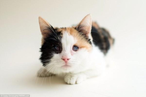 美國攝影師幫這些小貓拍攝沙龍照,讓大家看到牠們可愛的一面。(圖擷取自《每日郵報》)