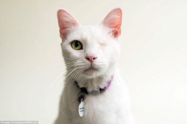 很多瞎眼的小貓因為外型不討喜,無法找到主人。(圖擷取自《每日郵報》)