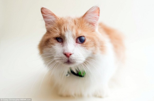 瞎眼小貓其實和其他貓咪一樣愛玩耍、對事物充滿好奇心。(圖擷取自《每日郵報》)