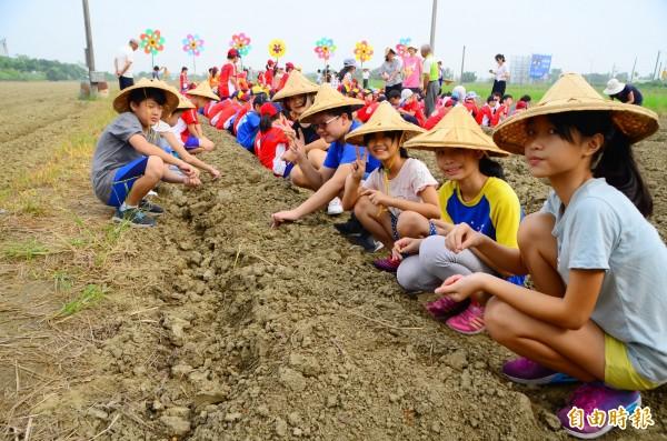 小朋友學習毛豆栽培,下田體驗,開心不已。(記者吳俊鋒攝)
