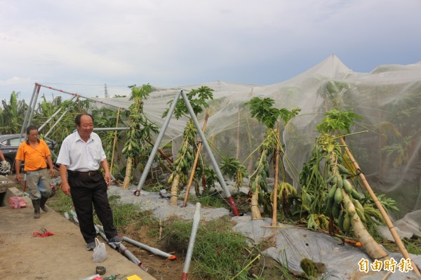 颱風吹壞溫網室,造成一堆「孤兒垃圾」。(記者詹士弘攝)