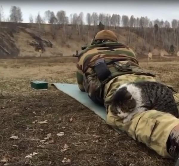 貓咪毫不畏懼槍聲,淡定伏在正進行射擊練習的士兵腿上。(翻攝影片)
