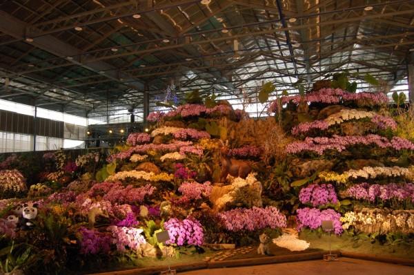 一年一度在後壁區台灣蘭花生技園區舉辦的台灣國際蘭展,明年將移往仁德舉辦,蘭花園區將規劃每月小型蘭展。(資料照,記者王涵平攝)