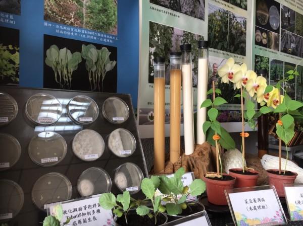 台中區農業改良場年度成果展,現場展示多項生物農藥或非化學農藥治劑。(記者顏宏駿攝)