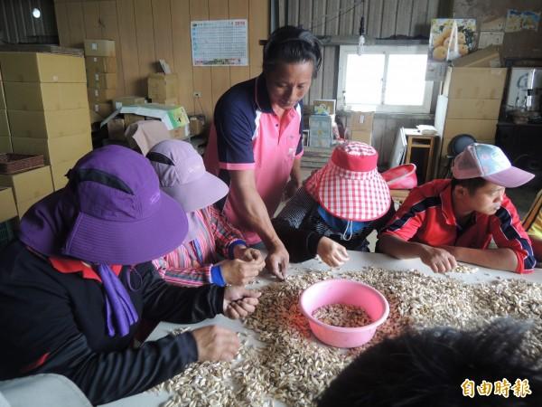王貴仙(中)今傳授身障者農業實務,幫助他們找到工作。(記者陳燦坤攝)