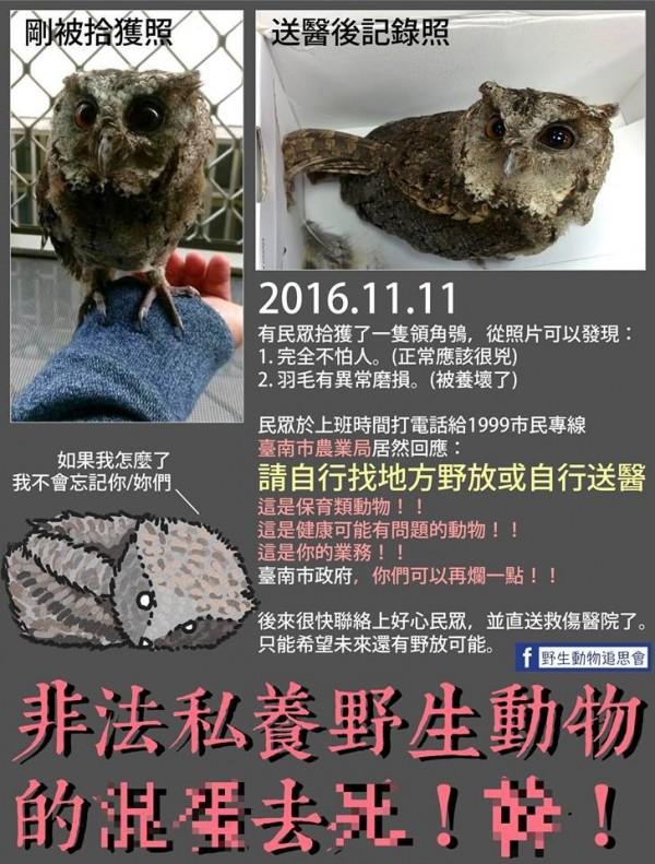 有台南民眾在都會鬧區撿到保育類動物領角鴞,農業局人員竟告訴他要「自行」野放或送醫,讓民眾當場傻眼。(圖擷自「野生動物追思會」臉書)