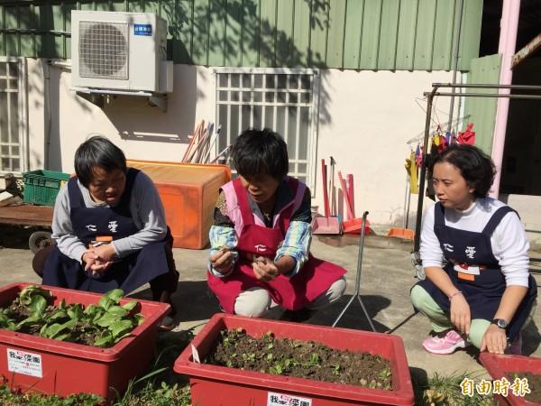荒置10幾年的新竹市東區精華地段天主教幼兒園,化身為身障者的小型工作坊,學員在開心農場種菜,自助助人。(記者洪美秀攝)