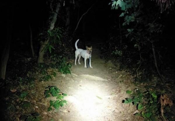 72歲老翁帶愛犬小白登柴山迷路,受困山區並覺不適,忠犬不離不棄指引搜救隊救出主人。(記者黃良傑翻攝)