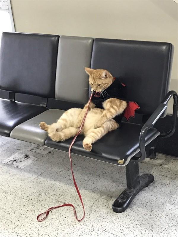 日本「走散貓」姿勢和眼神超像人類,在網路上爆紅。(圖擷自《CoroBuzz》)