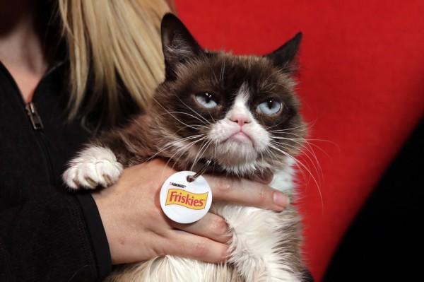 很多人都喜歡養貓,然而要慎防遭動物身上的寄生蟲感染。(法新社)