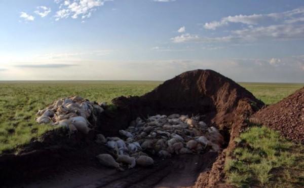 英國廣播公司(BBC)攝影團隊目睹15萬隻羚羊病死,讓工作人員嚇傻。(圖擷自《太陽報》)