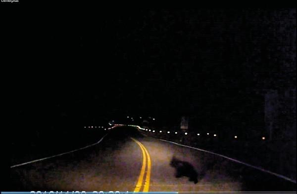 最後一隻小黑熊慢慢過馬路。(記者李忠憲翻攝)