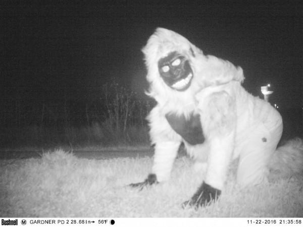 美國堪薩斯州加德納(Gardner)出現美洲獅,當地警方架設攝影機想拍下行蹤,卻拍到有人穿著大猩猩的玩偶裝路過。(圖擷自「Gardner Police Department」臉書)
