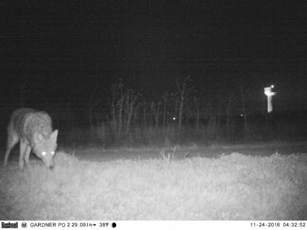 幸好還是有拍到野生動物。(圖擷自「Gardner Police Department」臉書)