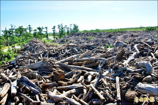 大量的廢樹枝及風災後的漂流木,至今都堆積在知本捷地爾。(記者王秀亭攝)