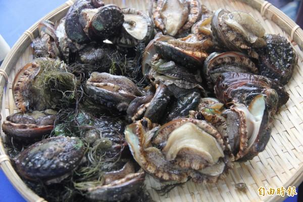 貢寮鮑以天然海菜餵食,肥美飽滿。(記者林欣漢攝)