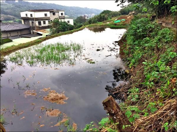 大屯溪上游養豬戶將未經處理的廢水排入溪中,釀成溪水呈現烏黑色,散發惡臭。 (民眾提供)