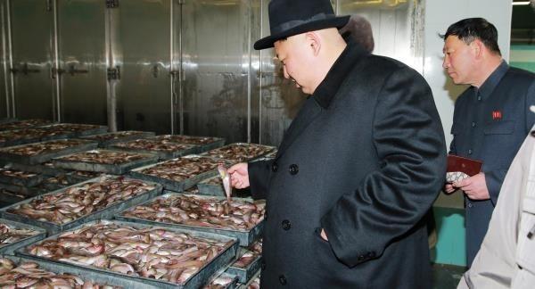 北韓漁民在海上漂流遭餓死之際,金正恩正在視察水產事業所,並看著滿滿的漁獲笑說「這些冷凍魚像是堆砌起來的金塊」。(擷取自《朝鮮日報》)