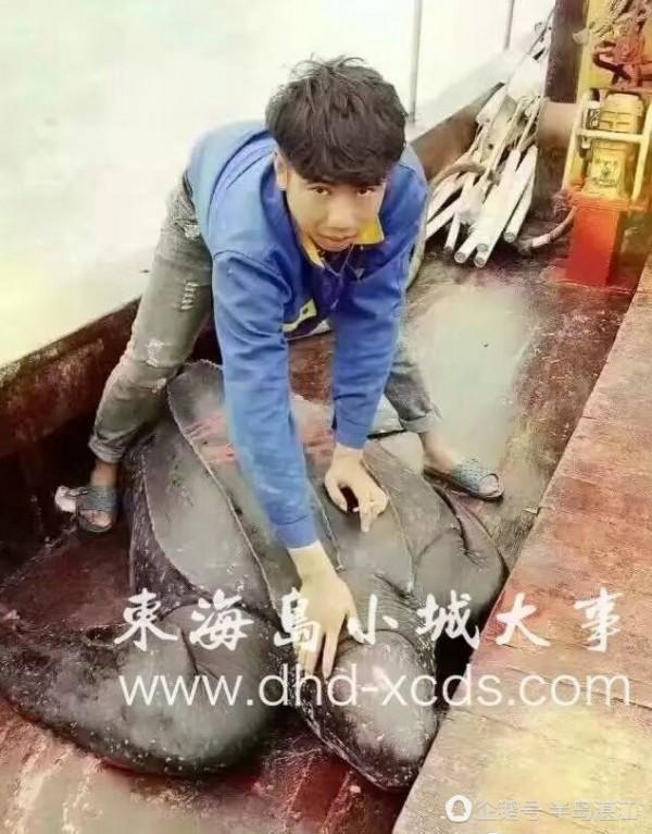 捕獲這隻棱皮龜的漁民吳增星不把龜賣給魚販,而是選擇放生。(圖擷取自微博)