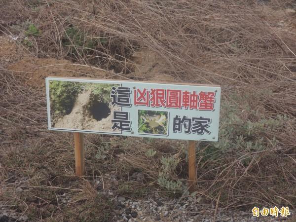 青螺溼地是澎湖最大的陸蟹棲息地,立牌告知民眾注意陸蟹出沒。(記者劉禹慶攝)