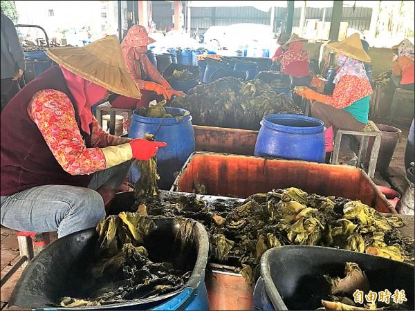 酸菜是大埤鄉重要的加工食品,供應量為全國之冠。(記者黃淑莉攝)