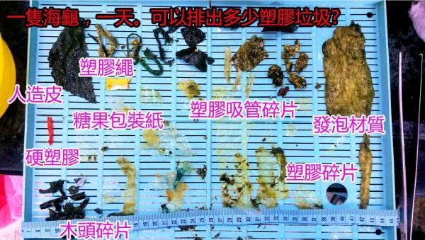 《海洋生態暨保育研究室》救援一隻綠蠵龜不料牠每天竟吐出大量塑膠垃圾。(圖擷取自海洋生態暨保育研究室)