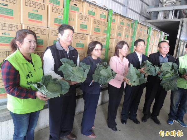 台灣首批高麗菜今外銷韓國。(記者陳燦坤攝)