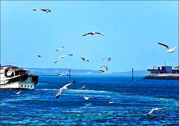 澎湖今年鳳頭燕鷗數量增加,顯示澎湖保育成果。(記者劉禹慶翻攝)