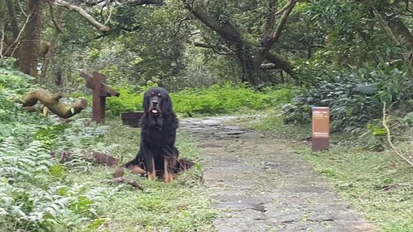 陽明山紗帽山登山步道今天發生獒犬咬人事件。(圖由台北市動保處提供)