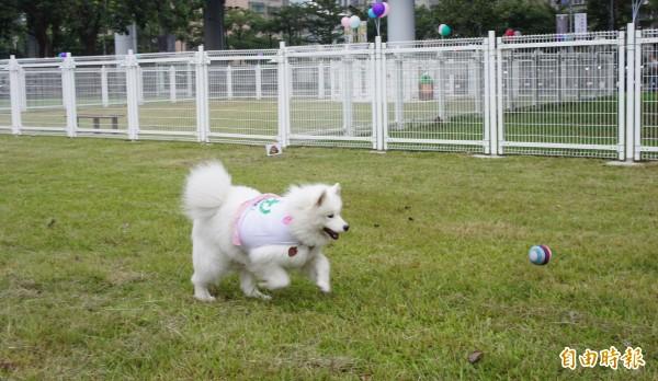台北市動保處統計,北市至少有三成飼主未攜帶寵物施打狂犬病疫苗。(記者黃建豪攝)