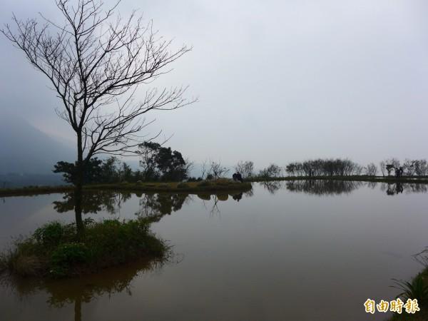 三芝區樂天社區打造濕地景觀,許多民眾大誇景色如八煙聚落「水中央」翻版。(記者李雅雯攝)
